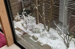 数年ぶりの大雪